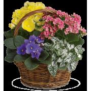 Cesta com flores diversas