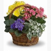 Cestas  mix de flores