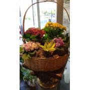 Cesta Mix de Flores