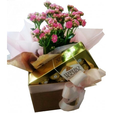 Vaso com flor de kalanchoe e bombons Ferrero Rocher