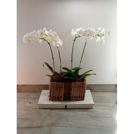 Orquidea em cachepot