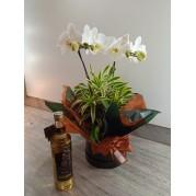 Orquidea com aguardente