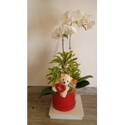 Orquidea com ursinho de pelucia
