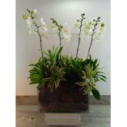 Orquidea em jardineira de vidro
