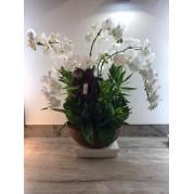 Orquidea premium