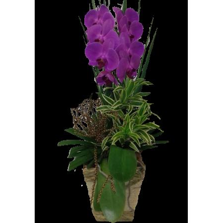 Linda orquídea lilas phalaenopsis modelo cascata para toda BH na sua floricultura online.
