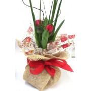Vaso de Tulipa Vermelha