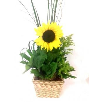 Girassol no Vaso para Presente